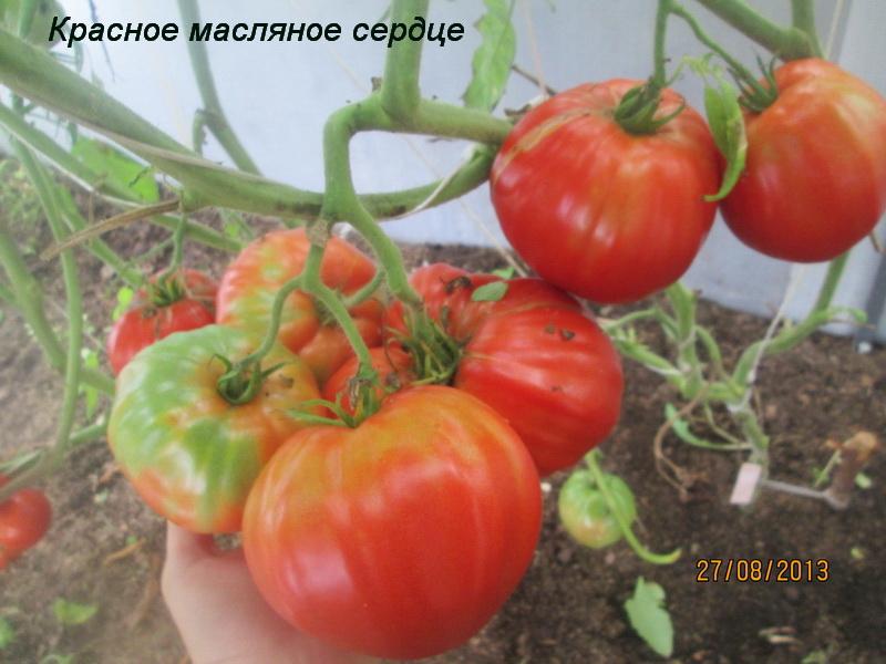 Сорта с плодами-гигантами (свыше 1 кг.)