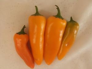 вкусный апельсин (1)