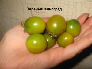 зеленый виноград2