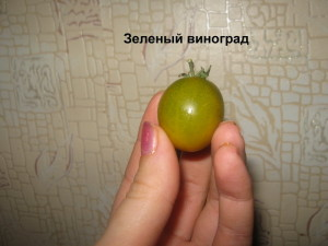 зеленый виноград3