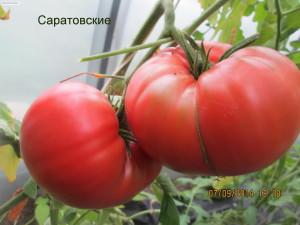 саратовские