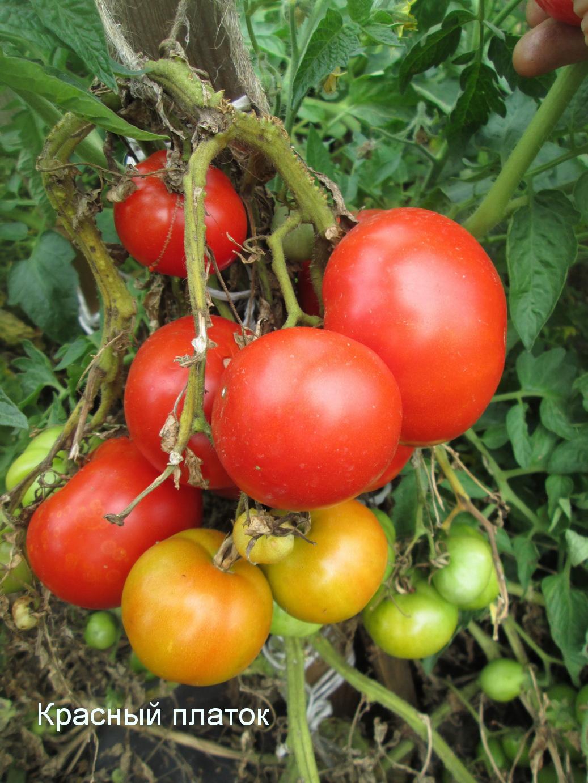 как хранить томаты осенью
