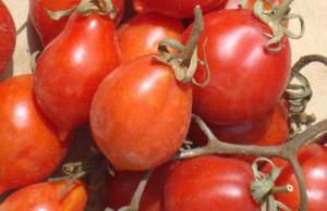 pomodori_piennolo