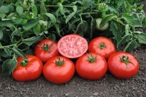 tomat-tonopa-f1-3