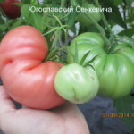 югославкий-сенкевича-300x225