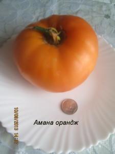 Амана орандж19