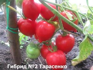 Гибрид 2 Тарасенко4