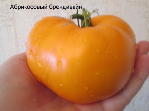 абрикосовый брендивайн3