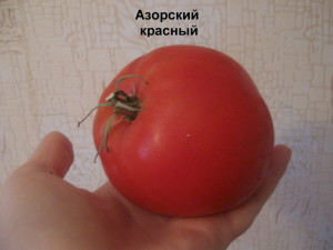 азорский красный11