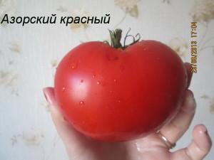 азорский красный2