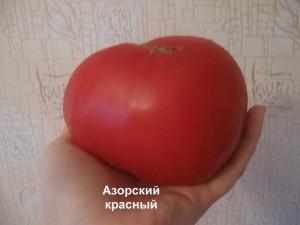 азорский красный252