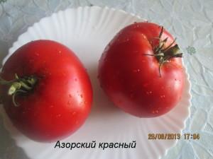 азорский красный9
