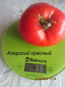 азорский красны4й1