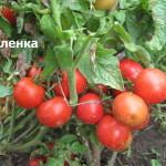 аленка1