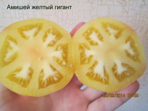 амишей желтый гигант1