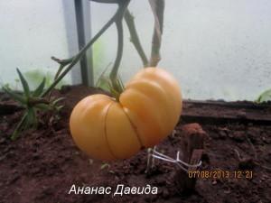 ананас давида