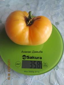 ананас давида2