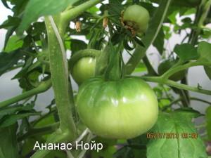 ананас нойр (черный ананас)