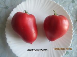 андижанские6