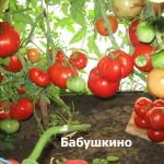 бабушкино11