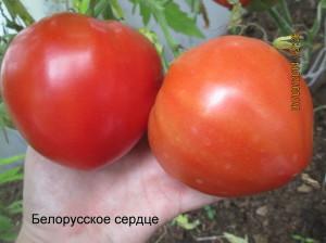 белорусское сердце2