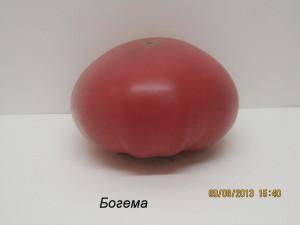 богема4