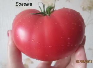 богема8