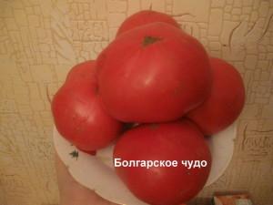 болгарское чудо11
