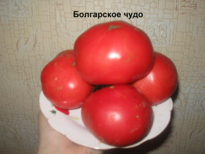 болгарское чудо12