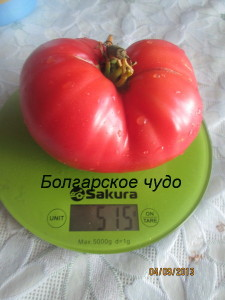 болгарское чудо2