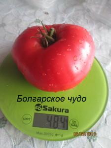 болгарское чудо61