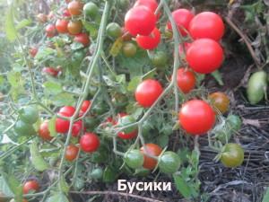 бусики1