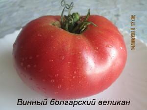винный болгарский великан9