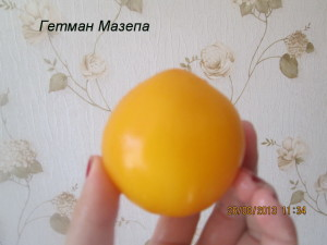 гетман мазепа41