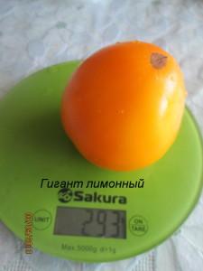гигант лимонный11