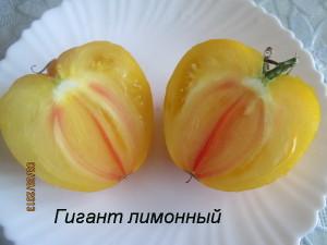 гигант лимонный3