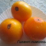 гигант лимонный5