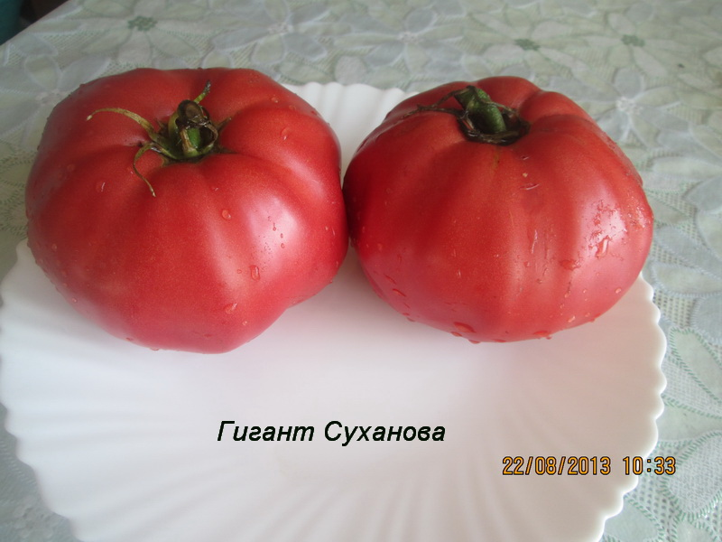 гигант суханова6