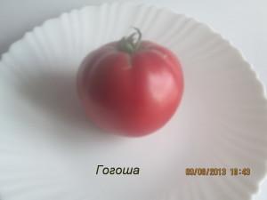 гогоша5