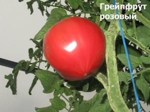 грейпфрут розовый11