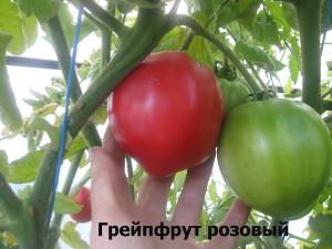 грейпфрут розовый5