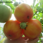 грейпфрут1
