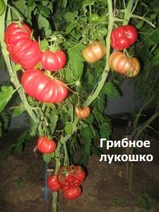 грибное лукошко1