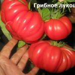 грибное лукошко5