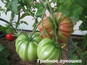 грибное лукошко7