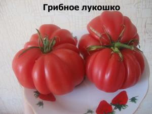 грибное лукошко9
