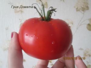 грик домата1