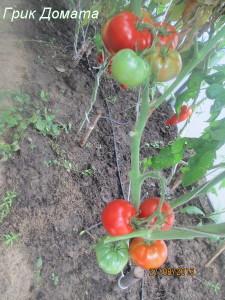 грик домата5