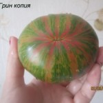 грин копия11