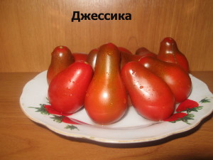 джессика4